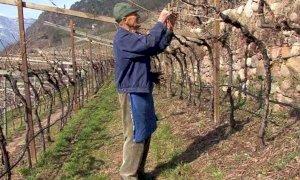 Agricoltura di montagna, stanziati 17 milioni per le indennità compensative