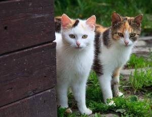 Cuneo, segnalazione di colonie feline sul territorio