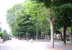 Il 'Rotary' dona cento alberi alla città di Cuneo
